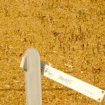 Auflaufen der Saat - Fichte HKG 84005