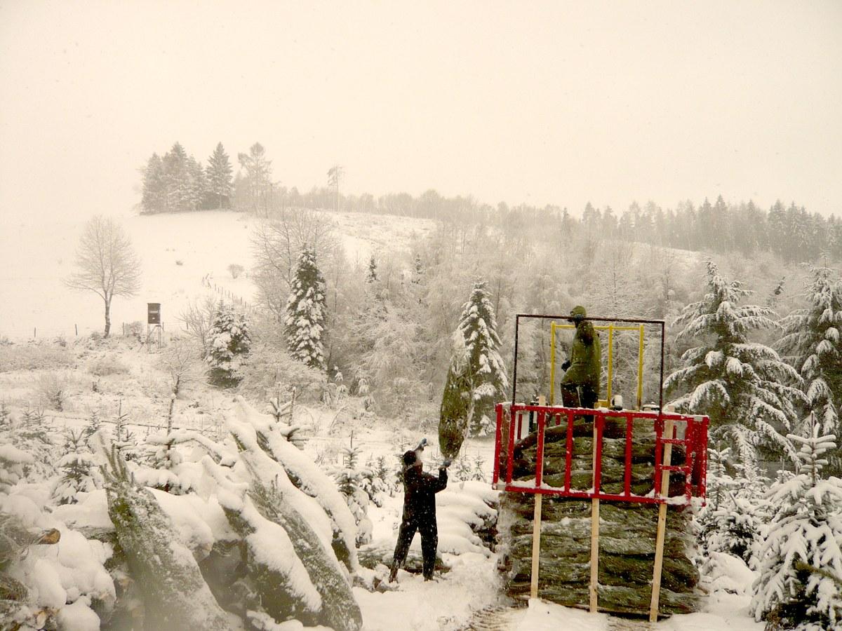 Palettieren von Weihnachtsbäumen